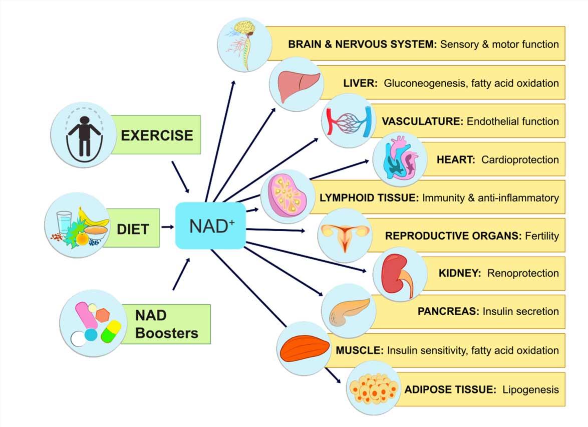 benefits of NAD+ IV miami
